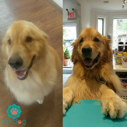 Barney showing off his freshness _) To book your grooming appointment call or email us at info_zendo