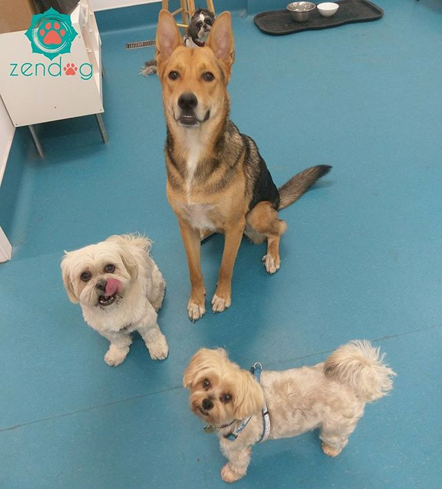 What an adorable pack! _) www.zendogservices