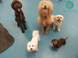 Happy Monday from this focused pack of cuties _www.zendogservices