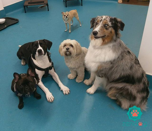 This adorable gang wishes you all a lovely weekend _) www.zendogservices