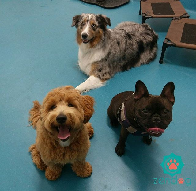 Happy Friday from this gang of cuties!__www.zendogservices