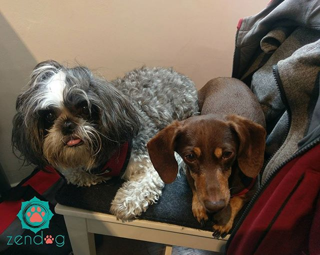 Cute overload with two munchkins_) P.s Tongue out Thursday by Tess lol__www.zendogservices