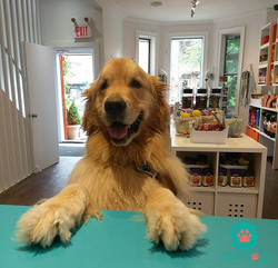 Barney's treat visit _) www.zendogservices