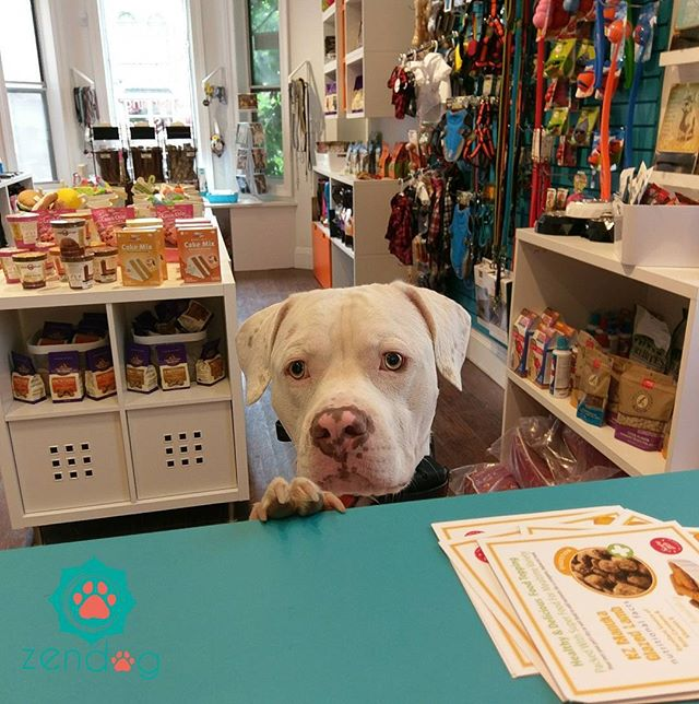 Tyson is very strategic with his facial expression lol _) www.zendogservices