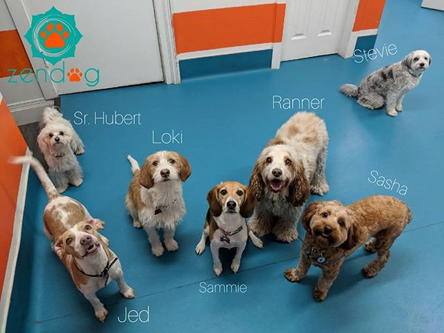 Some of today's #zendogsquad members to put a smile on your face 💪♥️ www.zendogservices