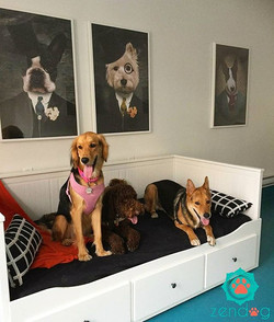 Dog party couldn't be more fun at our  boarding facility _) www.zendogservices
