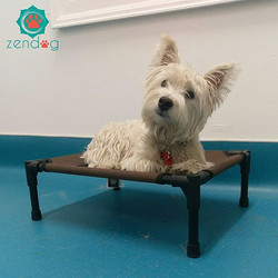 Haggis is pretty comfortable on his pet cot. Have a great week everyone _) www.zendogservices