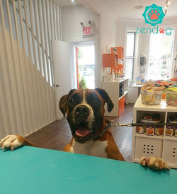 Ozzie came by for a treat _) www.zendogservices