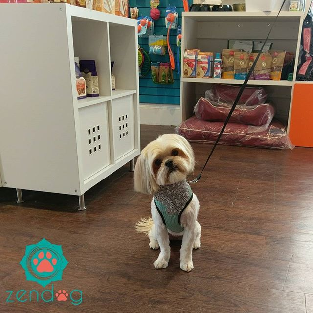 Mei Mei after getting groomed. Such a beautiful princess! _) www.zendogservices