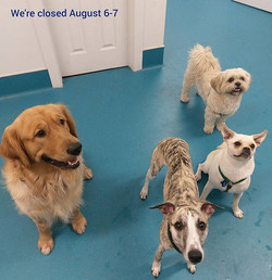This adorable pack reminds you that we're closed August 6-7 see you on Tuesday! 💙❤💙 Happy Weekend