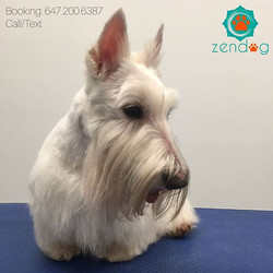 So regal 😍 Spring is in the air, get your pooch pampered at Zendog _For bookings and general groomi