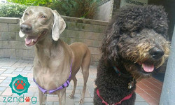Prince Riggins and his date with princess Meeka _) www.zendogservices