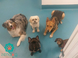 This incredible pack wishes you all a lovely weekend!_From left to right_ Riggs, Monkey, Gulliver, S