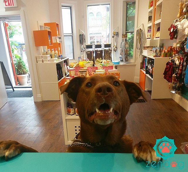 Rolo came by for a treat _) www.zendogservices