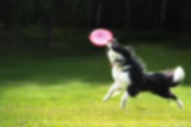 catch-a-frisbee.jpg
