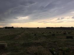 hayfield.jpg