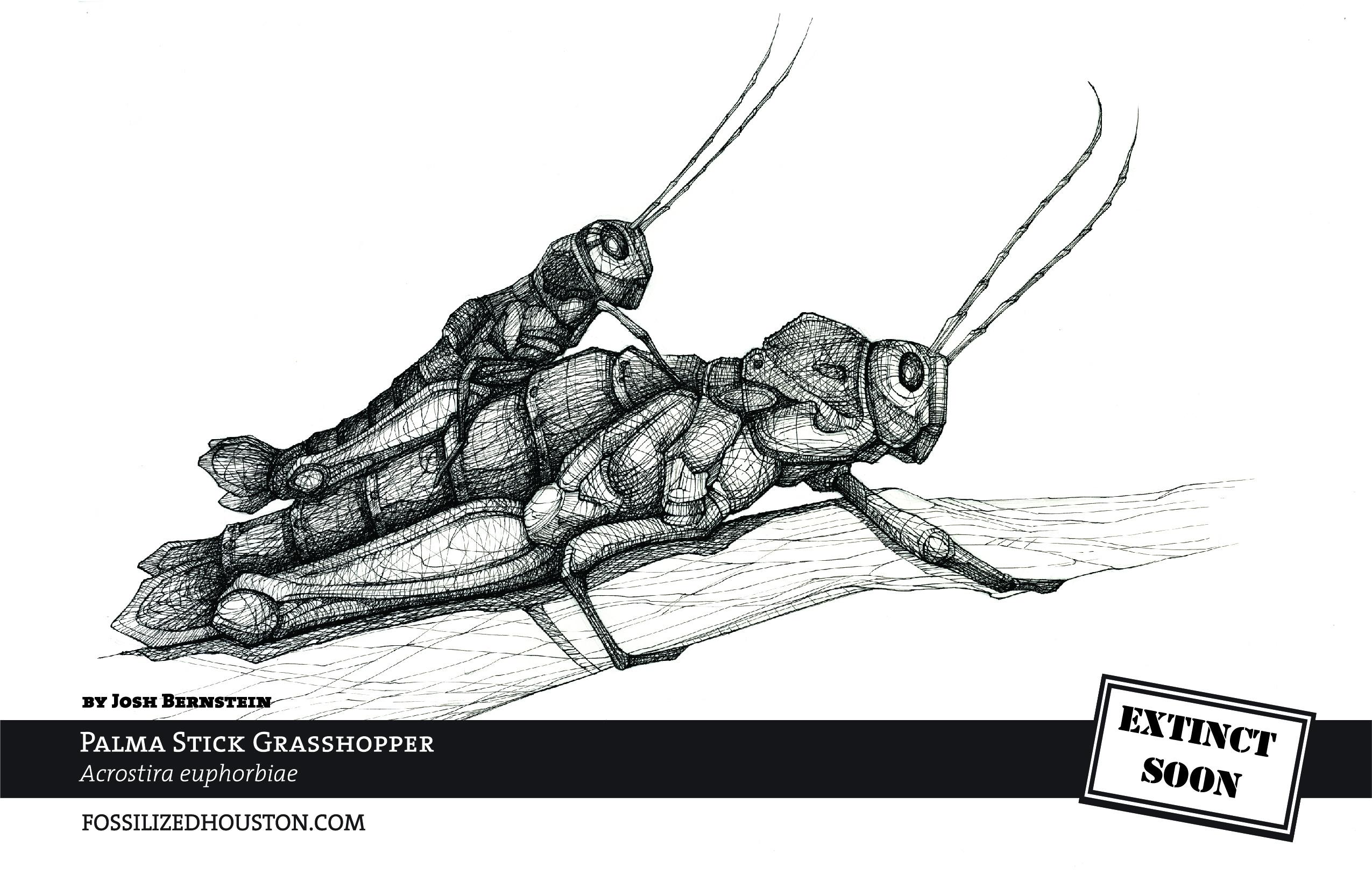 Palma Stick Grasshopper