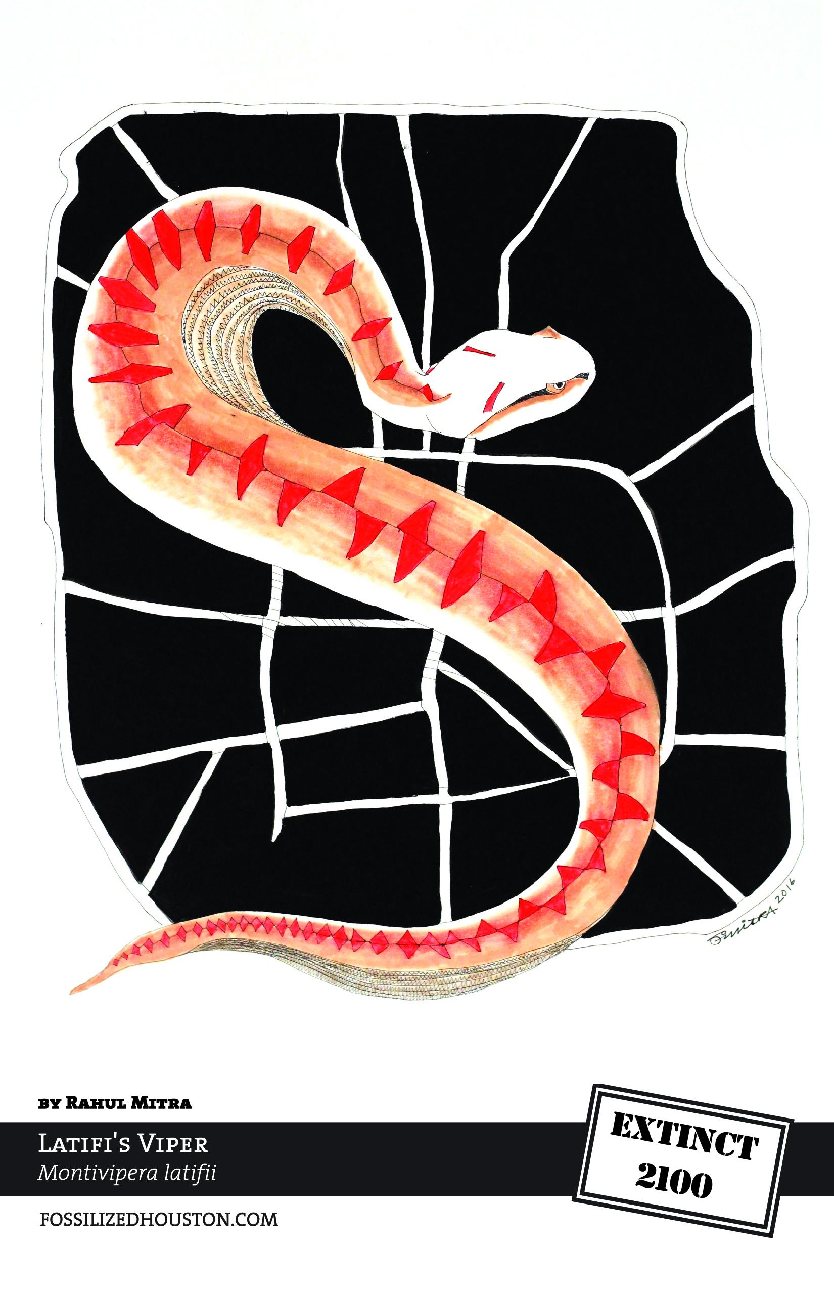 Latifi's Viper