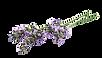 lavender, botanicals, plant, flower