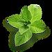 mint, botanicals