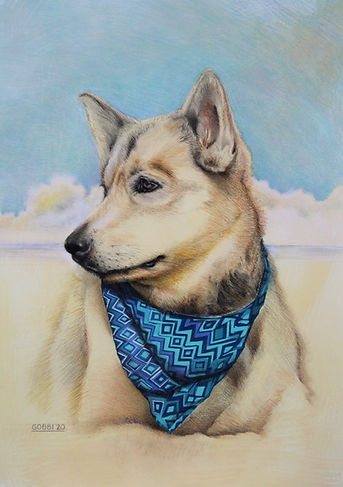 Maizy. pastel dog portrait