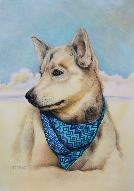 Maizy. pastel dog portrait