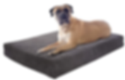 Pet Dog Bed Back Support Systems.png