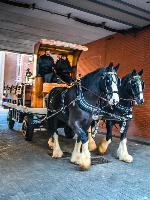 Heineken Experience Horses and Beer Wagos