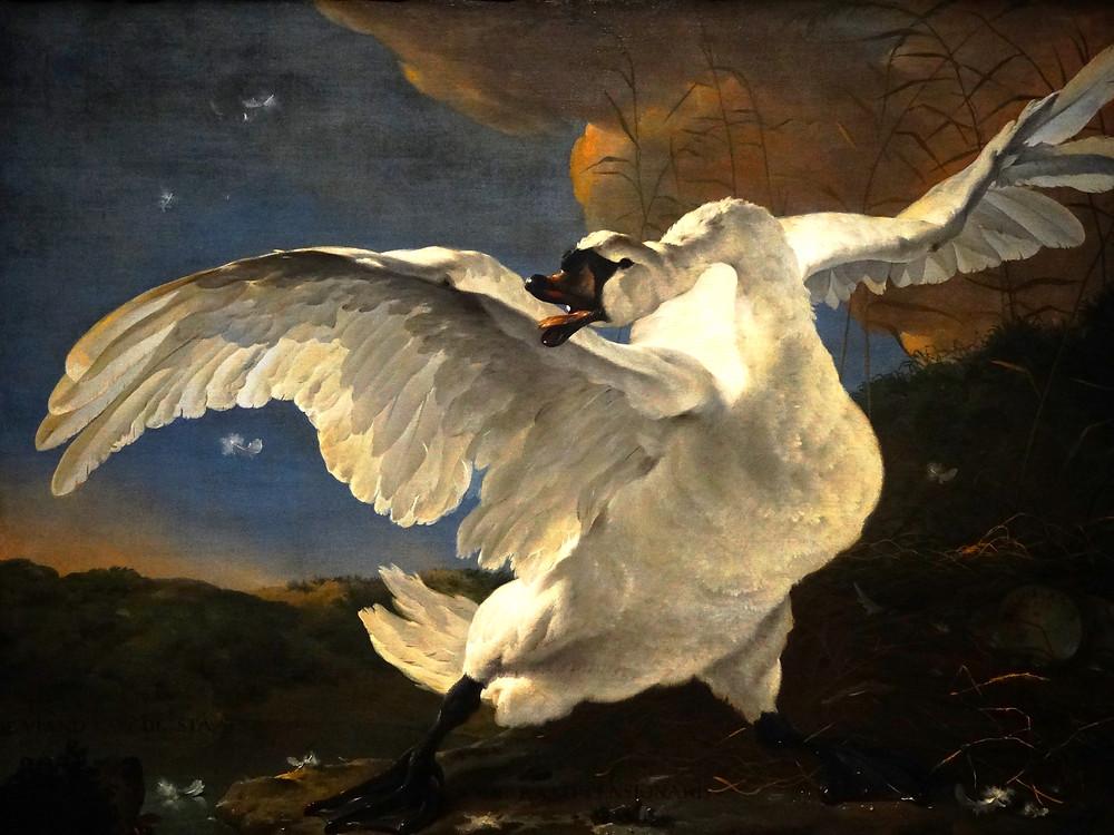 The Swan by Jan Asselijn - Rijksmuseum Amsterdam