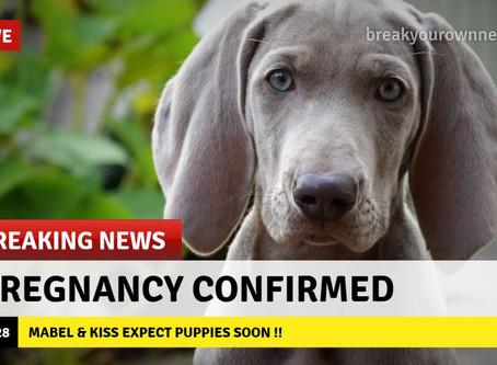 Weldra puppies