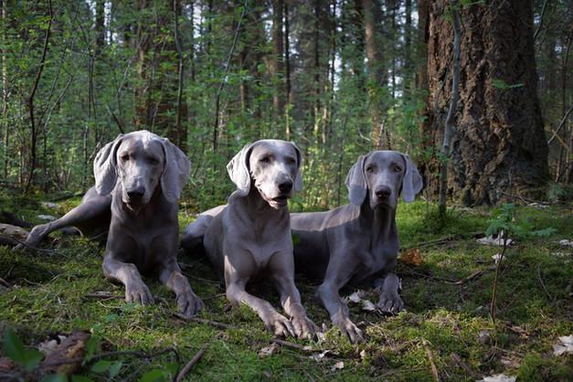 Mabel, Lexie, Mali