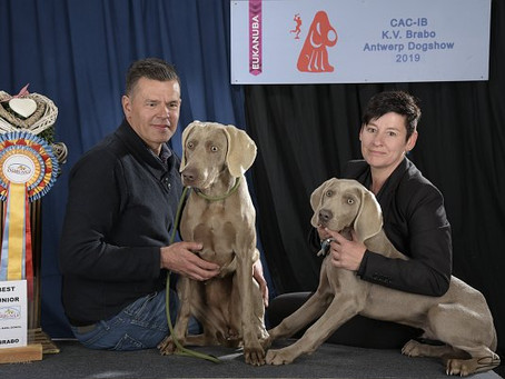 Antwerp Dogshow april 2019