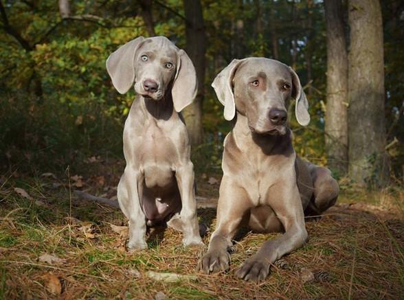 Mabel en Lexie