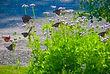 Jesus; Jean Ann Shirey; Books; Plum Delight, Poetry of the Earth; Purple Mist Flowers; Queen Butterflies; Christian Poetic Art Books; Amazon Kindle ebook; http://www.amazon.com/Plum-Delight-Poetry-The-Earth-ebook/dp/B008OC1WSA