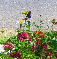Jesus; Plum Delight; Poetry of the Earth; Jean Ann Shirey; Poet; Jean Ann Shirey books; nature; flowers; Christian Poetic Art Books; Amazon Kindle eBook; http://www.amazon.com/Plum-Delight-Poetry-The-Earth-ebook/dp/B008OC1WSA