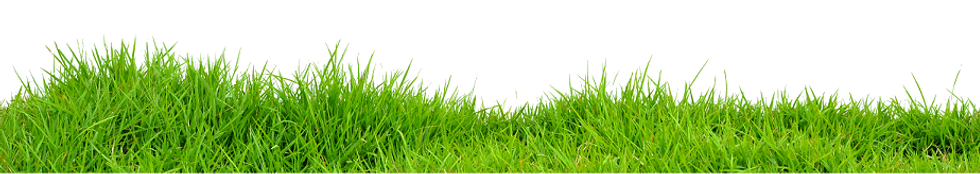 Grass-PNG-Images.png