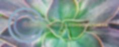 CCC19 succulent.png