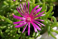Fleur d'été ...