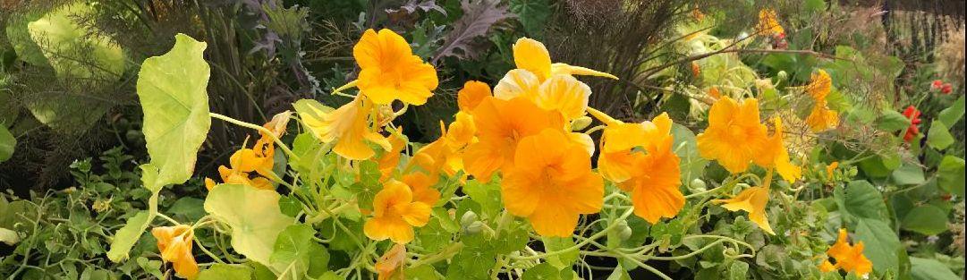 Hampton Ct Flowers