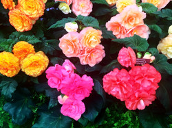 Chelsea Flower Show_edited