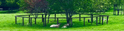 Cotswold%20Sheep_edited