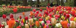 Belgium Flowers 2