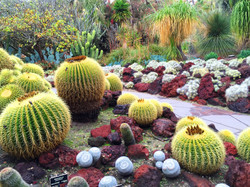 Huntington Cactus
