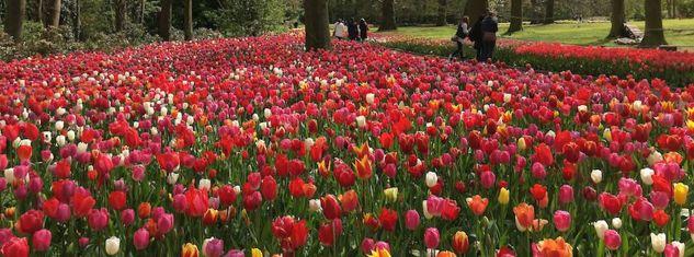 Belgium Flowers 4