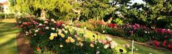 Huntington Garden Flowers_edited_edited