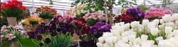 Chelsea Flower Show 3
