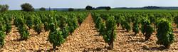Provence - Vineyards - Tom_edited