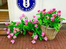 Amsterdam Tulip Museum - S_edited.jpg