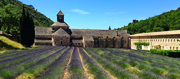 Provence Lavendar_edited.jpg