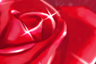 Red Roses of Passion are available!